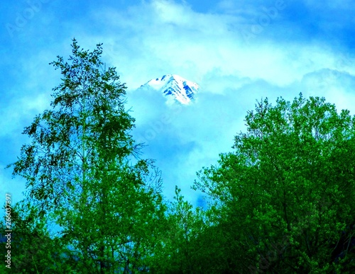 Aluminium Prints Dark grey French alpine peak shrouded in fog and framed by green trees in the foreground.