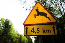 Wild Animals Warning Sign On The Road