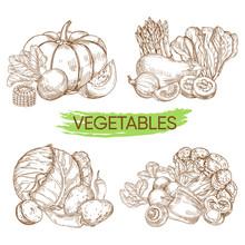 Hand Sketched Vector Vegetable...