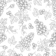Sketch Grapes Seamless Pattern Vector Texture Background. Illustration Of Seamless Pattern Vintage Branch Of Grape, Fruit Drawing Wallpaper