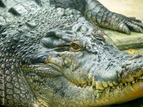 Deurstickers Krokodil alligator jaw moss