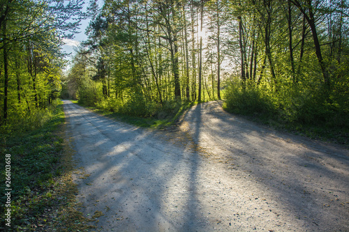 Poster Nature Forked road and green trees and sun light