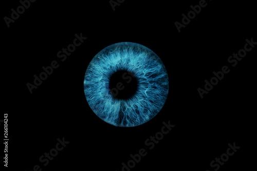 Foto auf AluDibond Iris dunkelblaue Iris
