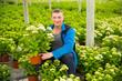 Leinwandbild Motiv Positive man florist looking for plant of  hortensia in pots while gardening