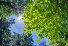 新緑イメージ 静岡県伊東市小室山公園
