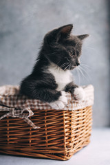 Little grey cat with white feet in basket on grey background