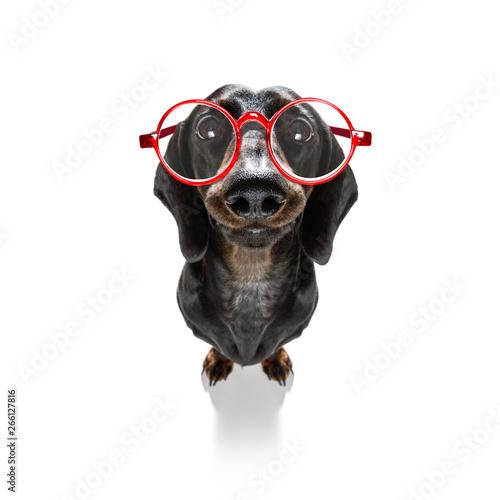In de dag Crazy dog dumb crazy dog