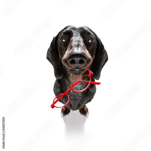 Fotobehang Crazy dog dumb crazy dog