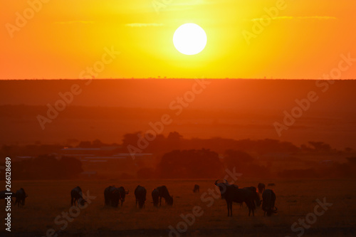 Poster Jaune Red sharp sunrise with wildebeest silhouette in Africa
