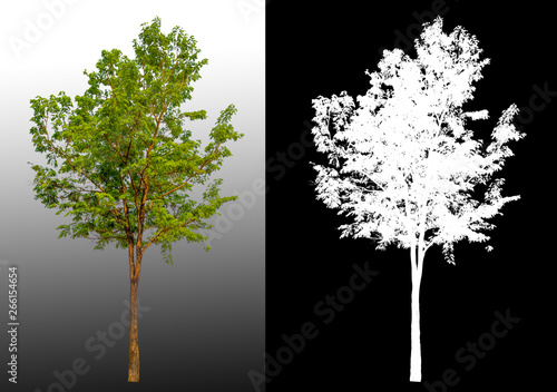 Foto auf Leinwand Schwarz single tree with clipping path and alpha channel