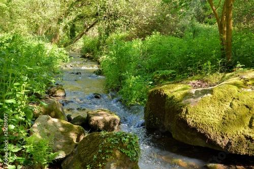 Vászonkép Sentier le long d'un ruisseau en Bretagne.France