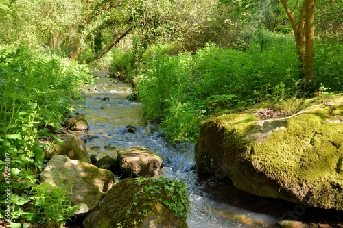 Obraz Sentier le long d'un ruisseau en Bretagne.France - fototapety do salonu