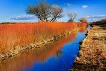 Orange Reeds Reflect Autumn Co...