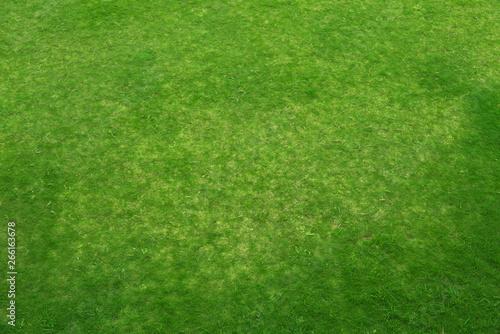 Top view of Natural green grass meadow, green grass texture land - 266163678