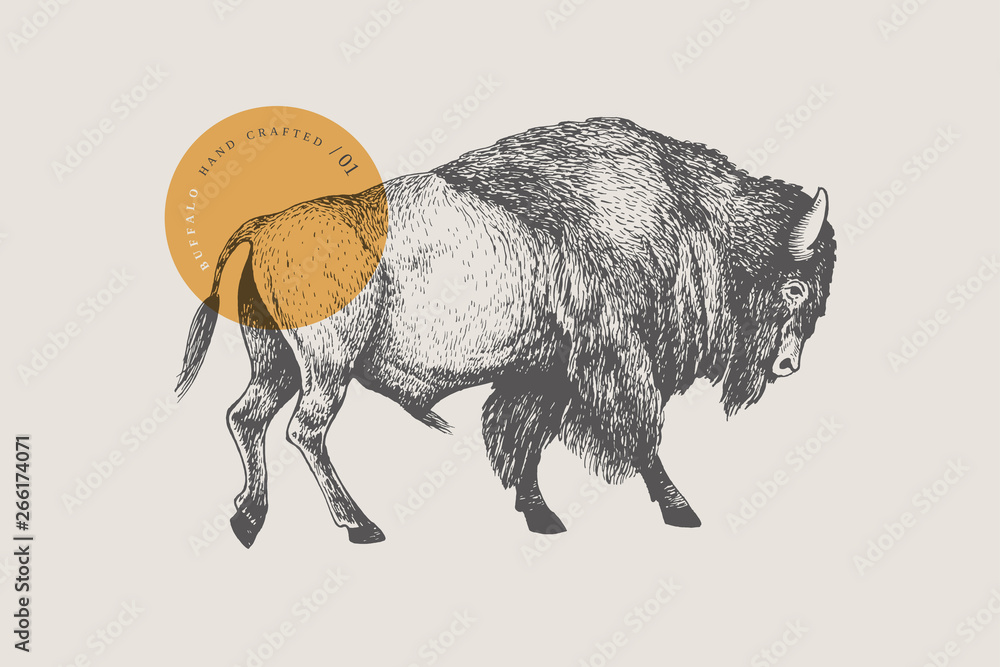 Fototapeta Hand drawing of American bison on a light background. Buffalo in vintage engraving style. Vector retro illustration.