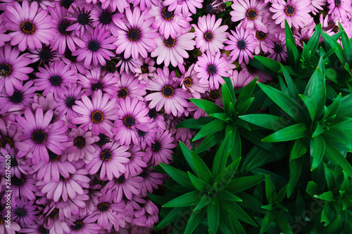 Fotografie, Obraz  Beautiful autumn floral background for greeting or postcards.