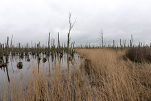Dead Trees In The Lake. Dead Trees In A Swamp. Dead Trees In A Water. Germany