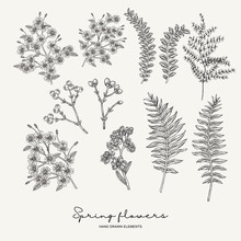 Hand Drawn Fern Leaves, Stock, Gillyflower And Gypsophila. Spring Flowers Set. Garden Plants. Botanical Vector Illustration. Engraving Style.