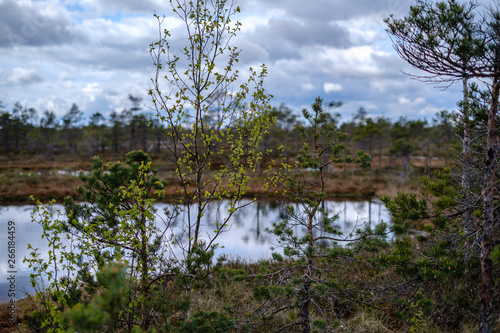 Foto op Plexiglas China swamp lakes with reflections of blue sky and clouds in National Nature Park Kemeri in Latvia
