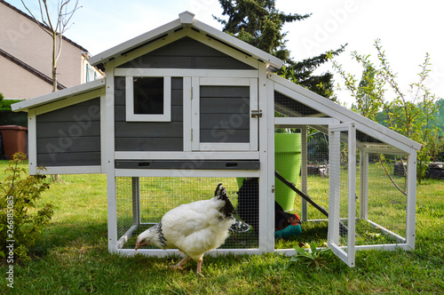 A hen house or chicken coop with hens Canvas Print