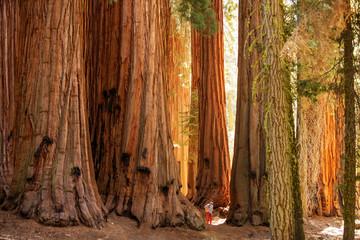 Planinar u nacionalnom parku Sequoia u Kaliforniji, SAD