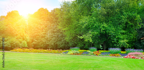 Photo  Garden with beautiful flowers and sun. Wide photo .