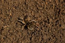 Bouncing Spider Tarantula Digs...