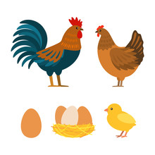 Set Of Chicken, Rooster, Eggs....