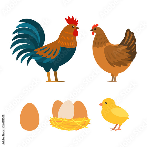 Cuadros en Lienzo Set of chicken, rooster, eggs. Flat vector illustration isolated