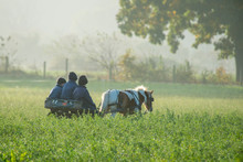 Amish Boys In Field On Cold Fo...