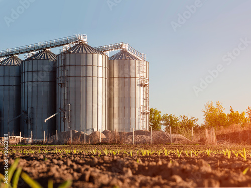 Fototapeta Closeup agricultural silos and young corn starts to grow in foreground  obraz