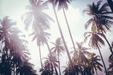 Coconut palm trees in sunset light. Vintage background. Retro toned poster. - 266236259