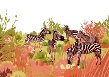 Lions Hunting Scene On A Zebra...