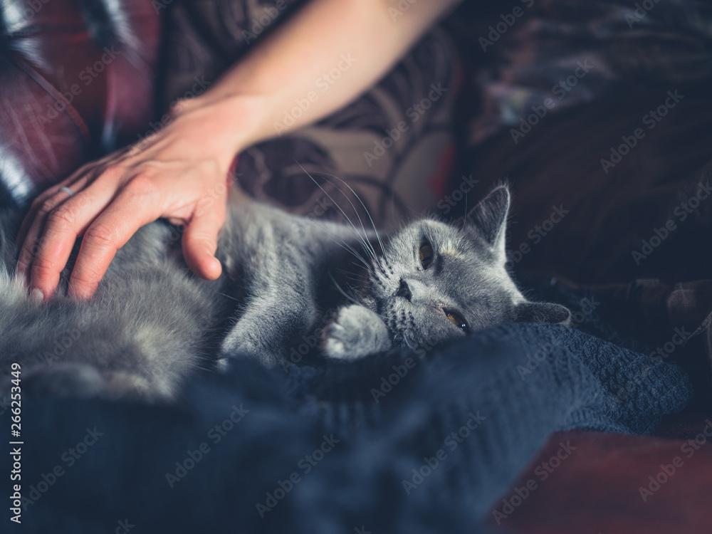 Fototapety, obrazy: Woman's hand petting british shorthair cat