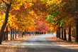 A curved road with red and orange autumn trees.