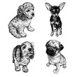Cute puppies set. Terrier, spaniel and pug. Black and white hand drawing.