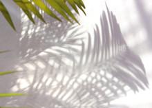 Tropical Palm Leaf Shadow On W...