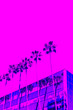Leinwanddruck Bild - Palm Trees. Trendy gradient of blue, purple and pink colors