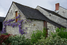 Purple Wisteria Growing Alongside The Old Stone Wall Of A Country House In The Loir Valley, France