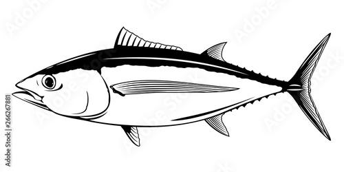 Albacore tuna fish in side view, realistic sea fish illustration on white backgr Canvas Print