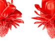 Leinwandbild Motiv Etlingera elatior, Red torch ginger flower isolated on white background, with clipping path