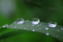 After Rain Water Drops On Gree...