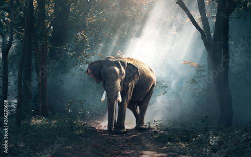 Keuken foto achterwand Olifant Слоник