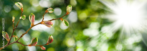 isolated image of buds on a tree branch against the sky Canvas Print