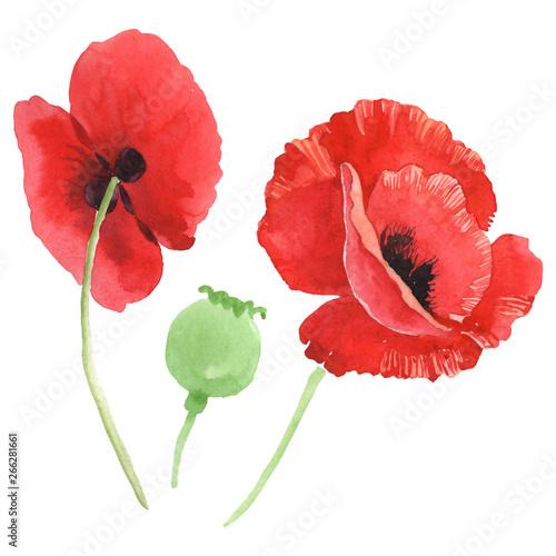 Red poppy floral botanical flowers. Watercolor background illustration set. Isolated poppy illustration element. - 266281661