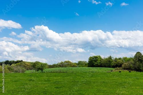 (栃木県-自然風景)夏空の下の牧場風景6 Canvas Print