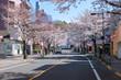 聖蹟桜ヶ丘 さくら通り 春