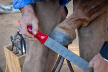Farrier Working On A Horse