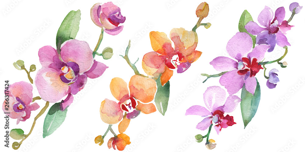 Fototapety, obrazy: Orchid bouquets floral botanical flowers. Watercolor background illustration set. Isolated orchid illustration element.