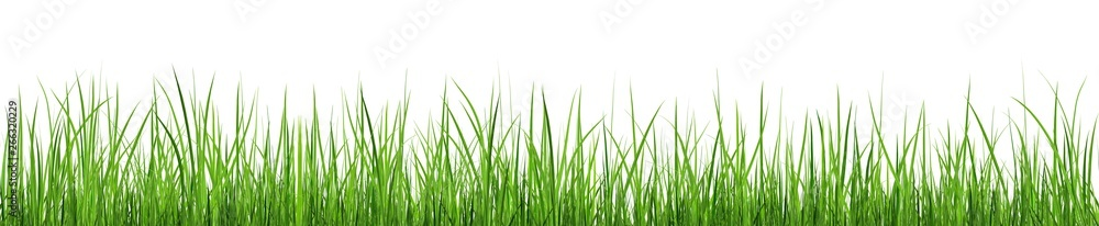 Fototapeta A bunch of green grass isolated on white background